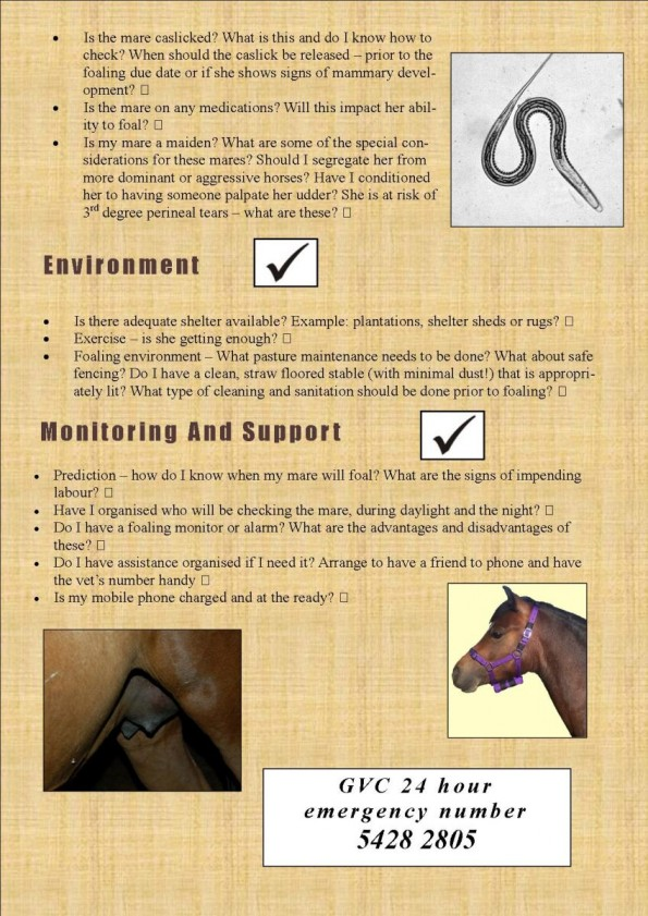 Foaling are you prepare DJ article (1)