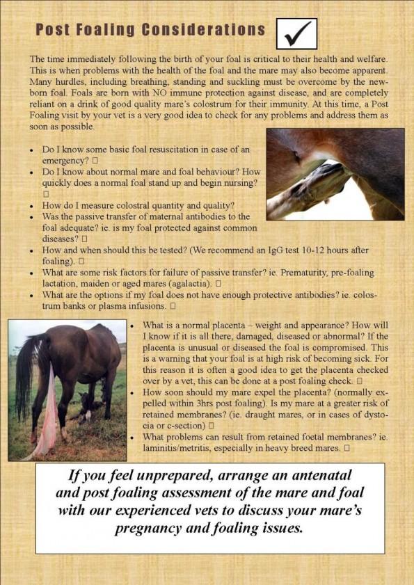 Foaling are you prepare DJ article (3)