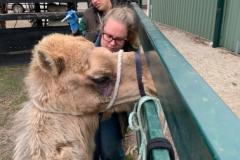 camel-TN-JB